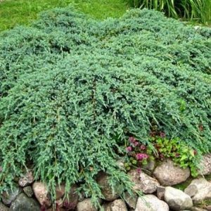 Kaeaepioekataja-green-carpet