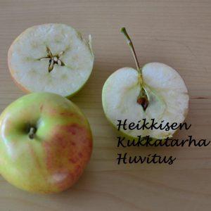 Omenapuu-huvitus-2