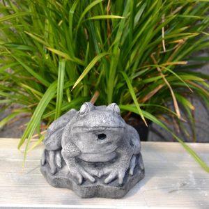 Patsas-pieni-sammakko