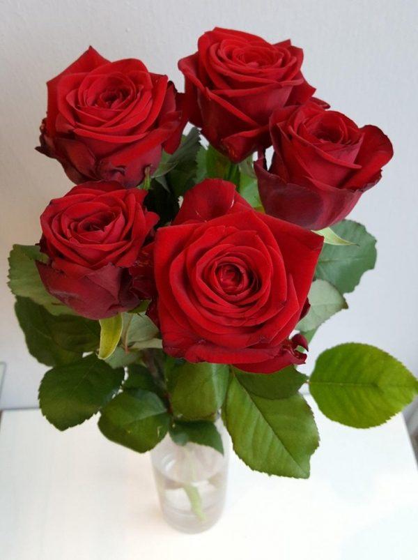 Punaiset-ruusut