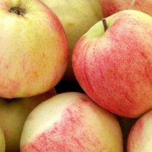 omenapuu-jaettimelba-600x379