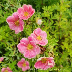 Pensashanhikki-Pink-paradise2