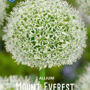Laukka-Mount-Everest