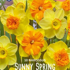 Narcis-Sunny-Spring