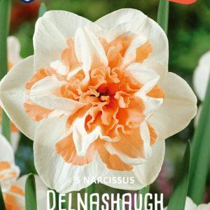 Narsissi-Delnashaught
