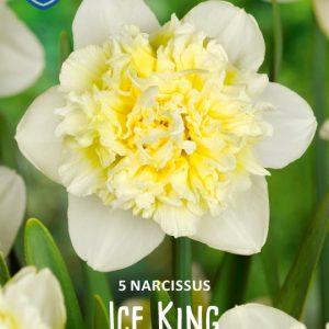 Narsissi-Ice-King