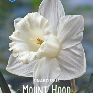 Narsissi-Mount-hood-2