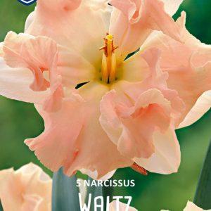 Narsissi-Waltz-2
