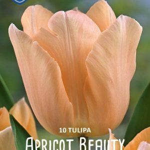 Tulppaani-Apricot-beauty