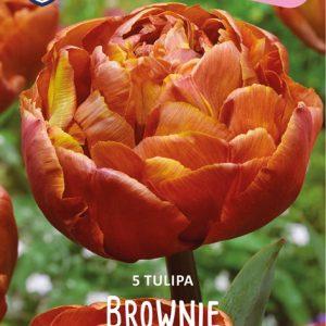 Tulppaani-Brownie