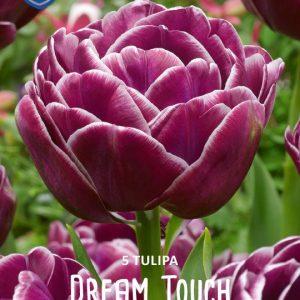 Tulppaani-Dream-touch-2