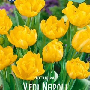 Tulppaani-vedi-napoli-2